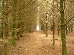 way through the woods